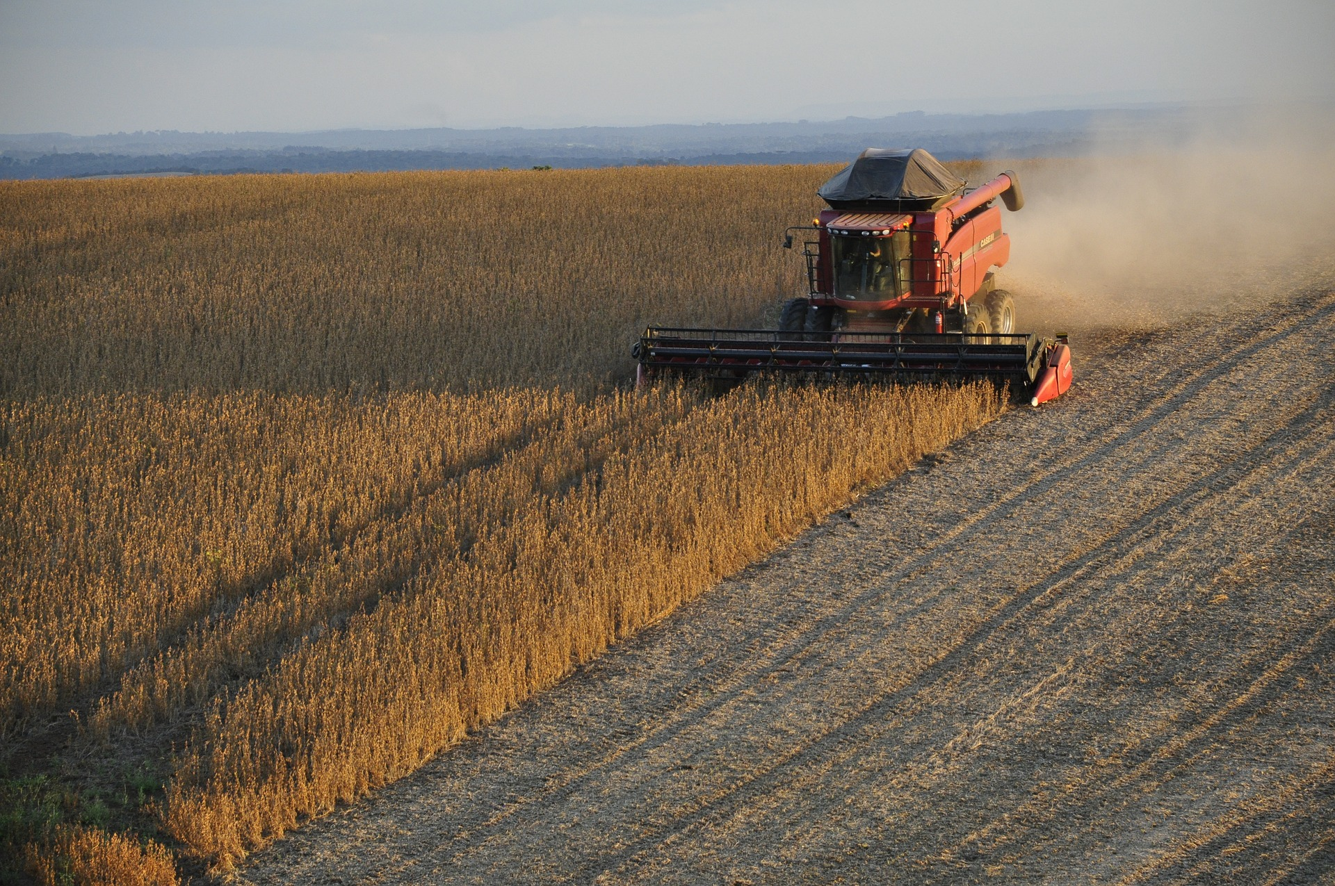 Soy being harvested by a big machine