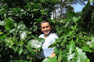Female worker among coffee bushes