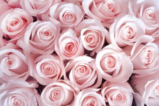 A bouqet of pink roses