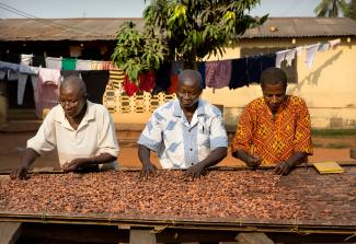 Three man sorting through cocoa beans
